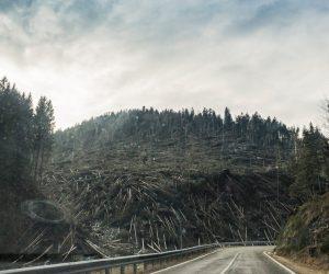 highway deforested