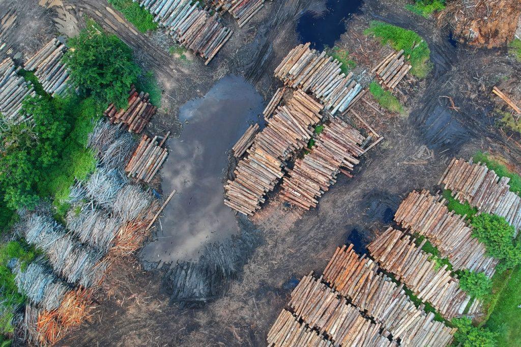 lumber and wood